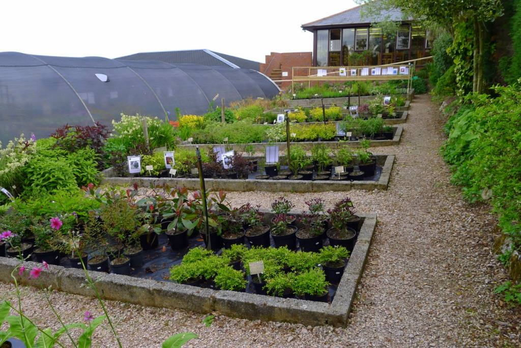 nursery and polytunnel plus cafe