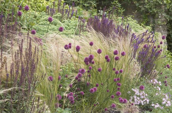 Stipa Salvia Allium Sarah Price Landscapes